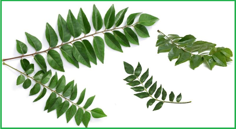 benefits of curry leaves in hindi